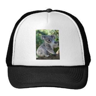 Koala australiana mimosa linda gorro de camionero
