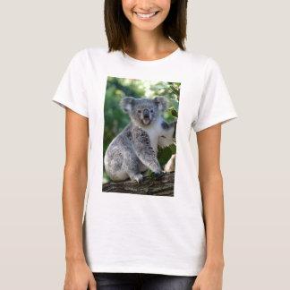 Koala australiana mimosa linda playera