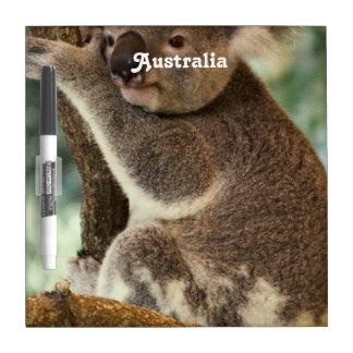 Koala australiana tableros blancos
