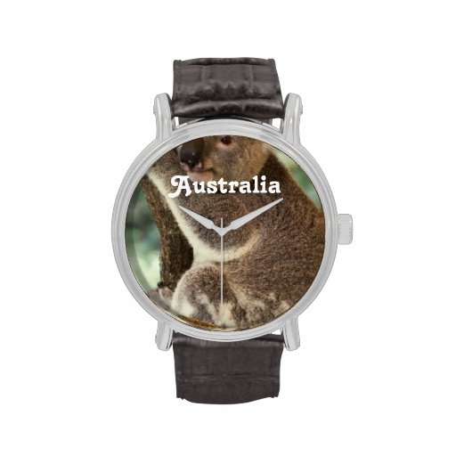 Koala australiana reloj