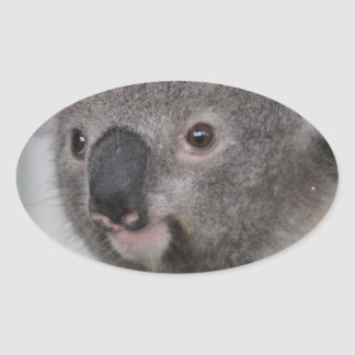 Koala Baby Oval Sticker