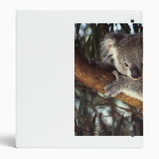 Koala Bear 3 Ring Binder