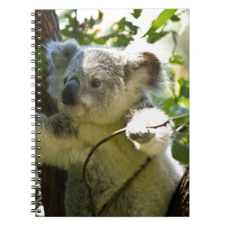 Koala Bear Aussi Safari Peace Love Nature Destiny Spiral Notebooks