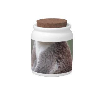 koala bear Aussie outback bush tree forest climb Candy Jar