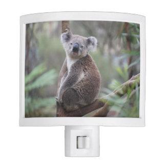 koala bear Aussie outback bush tree forest climb Night Light
