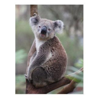 koala bear Aussie outback bush tree forest climb Postcard