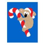 Koala Bear Candy Cane Post Card