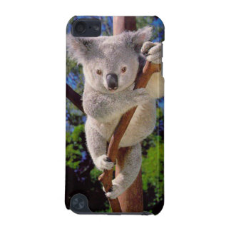 Koala Bear iPod Touch (5th Generation) Cover