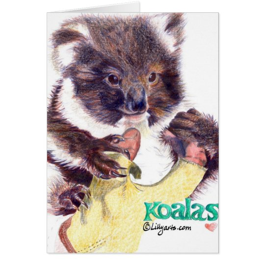 Koala Bear Colored Pencil Greeting and Note Card
