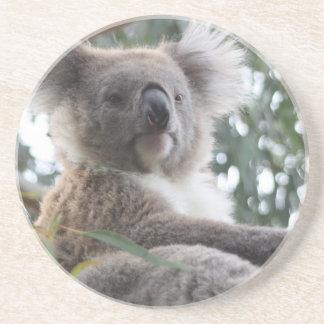 Koala Bear Facts Coaster