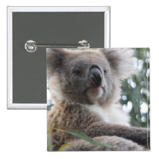 Koala Bear Facts Square Pin