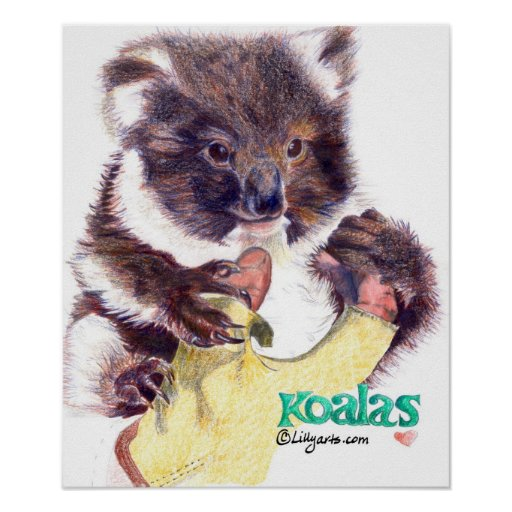 Koala Bear Fine Art  Print and Poster