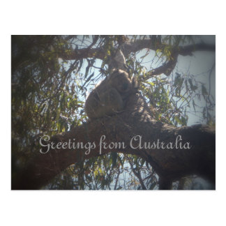 Koala bear greetings from Australia Postcard