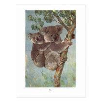 Koala Bear in Tree illustration Postcard