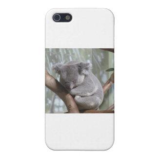 koala bear iPhone SE/5/5s case