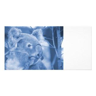 koala bear looking right blue marsupial photo cards