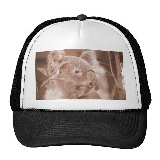 koala bear looking right sepia.jpg trucker hat