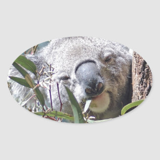 Koala bear oval sticker