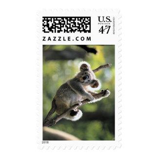 Koala Bear Postage Stamp