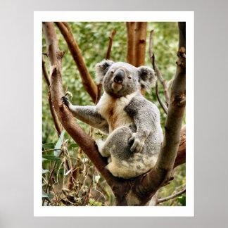 Koala Bear Poster & Prints