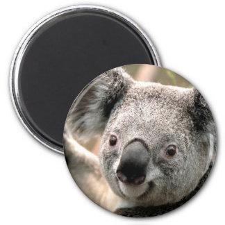 Koala Bear Refrigerator Magnet