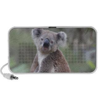 Koala Bear Safari Jungle Outback Congratulations PC Speakers