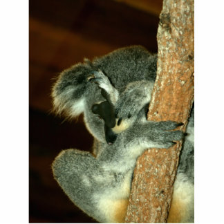 Koala Bear Sleeping with paw over face Photo Cutouts