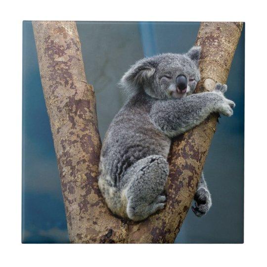 Koala Bear Sleeps Hugging A Tree Ceramic Tile Zazzle Com