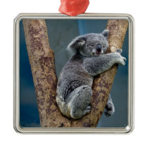 Koala Bear Sleeps Hugging A Tree Metal Ornament