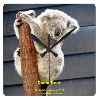 Koala Bear Square Wall Clock