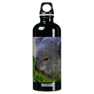 Koala Bear Water Bottle