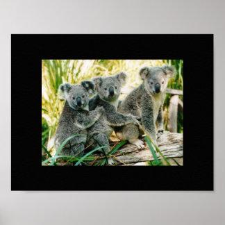 koala bear wild print