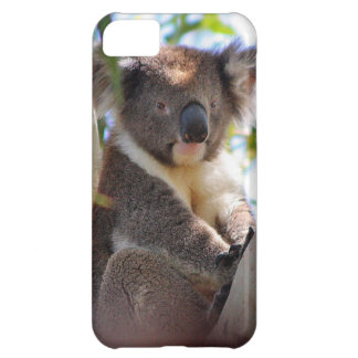 Koala Bears Aussi Outback Destiny Nature Cover For iPhone 5C