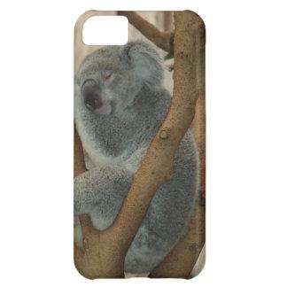 Koala Bears Aussi Outback Destiny Nature iPhone 5C Covers