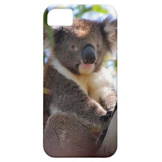 Koala Bears Aussi Outback Destiny Nature iPhone 5 Cover