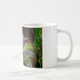 Koala Bears Aussi Outback Destiny Nature Classic White Coffee Mug