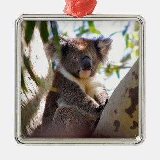 Koala Bears Aussi Outback Destiny Nature Christmas Ornament