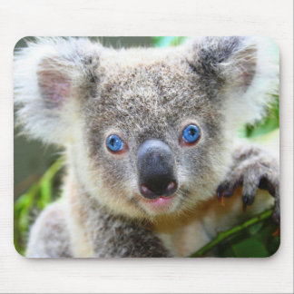 Koala Bears Mouse Pad
