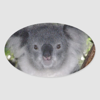 Koala Bears Oval Sticker