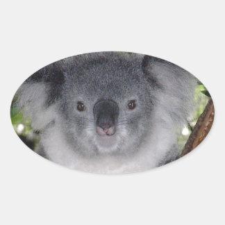 Koala Bears Oval Sticker