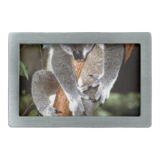 koala belt buckles