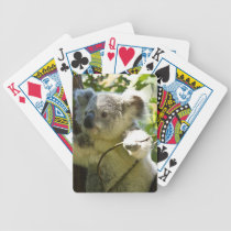 koala bicycle playing cards