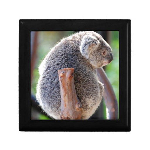 Koala Caja De Recuerdo
