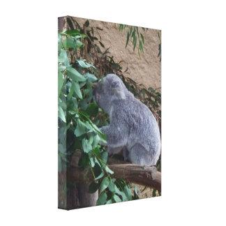 Koala Gallery Wrap Canvas