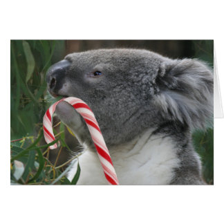 Koala Christmas Candy Cane Greeting Card