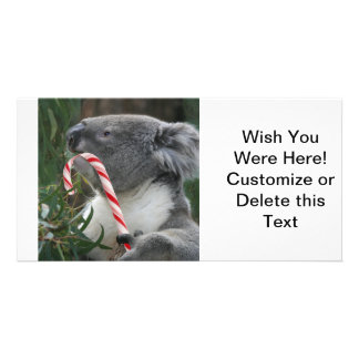 Koala Christmas Candy Cane Card