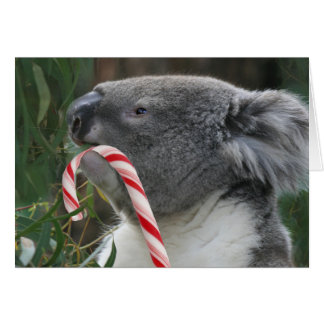 Koala Christmas Candy Cane Greeting Cards