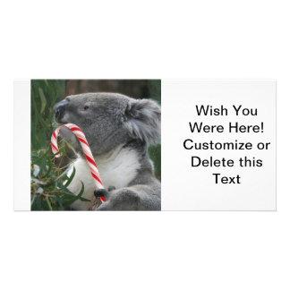 Koala Christmas Candy Cane Photo Cards