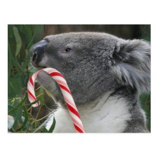 Koala Christmas Candy Cane Postcard