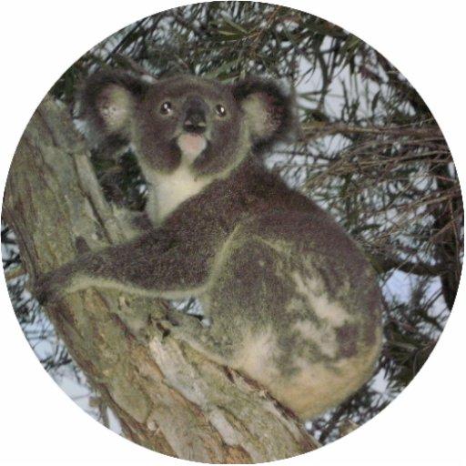 Koala Christmas Ornament